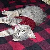 I don't think this kitty is a fan of the sweater.  Source: Flickr user Kate Sheets