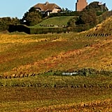 French vineyards changed color throughout the season.