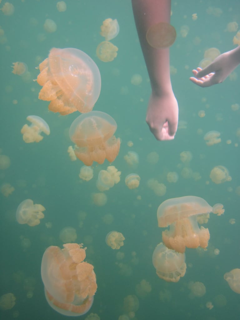 Immerse Yourself With Jellyfish