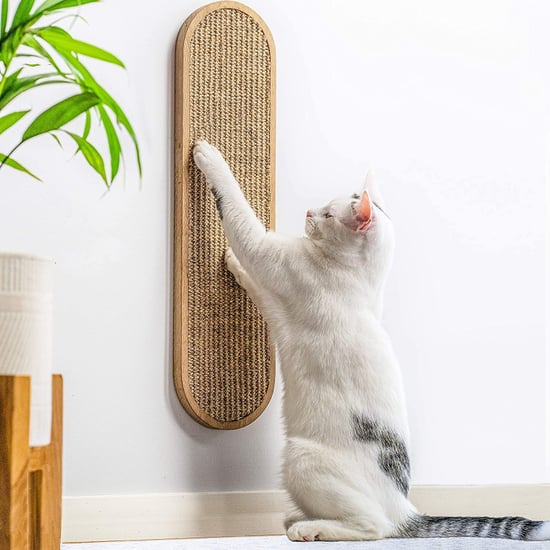Best Problem-Solving Products For Cat Ownder