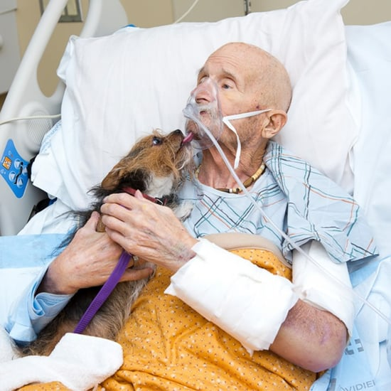 Veteran Reunites With Dog For Last Time in Hospice Care