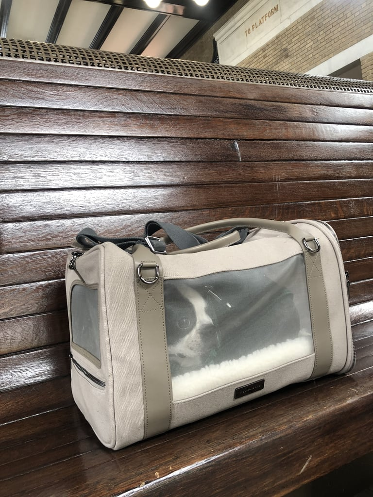 Beau's First Impression of the Maxbone Global Citizen Pet Carrier Bag