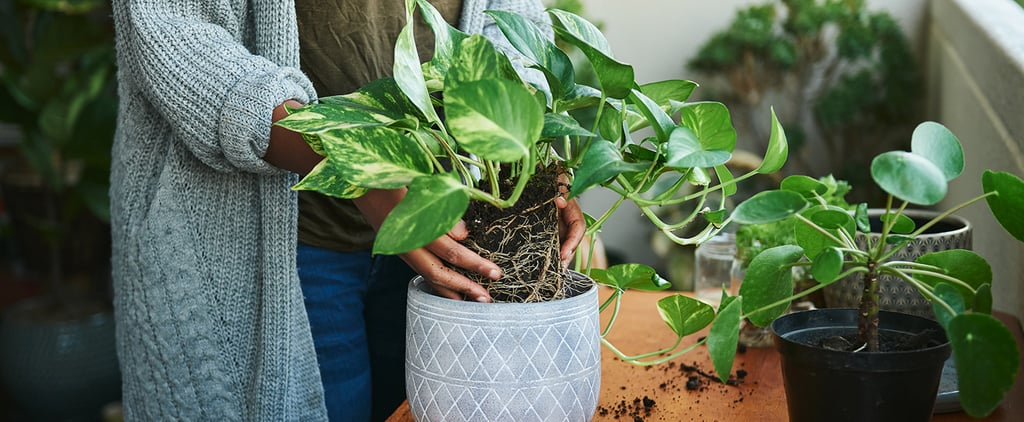 Here's How to Easily Repot a Plant