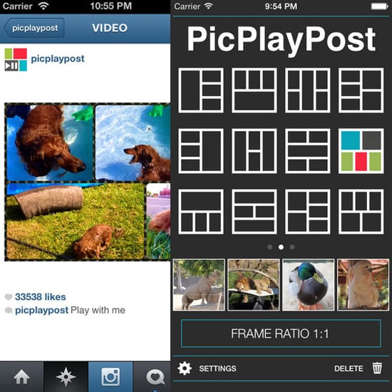 PicPlayPost Video Collage App | Pet Camera For iPhone | POPSUGAR ...