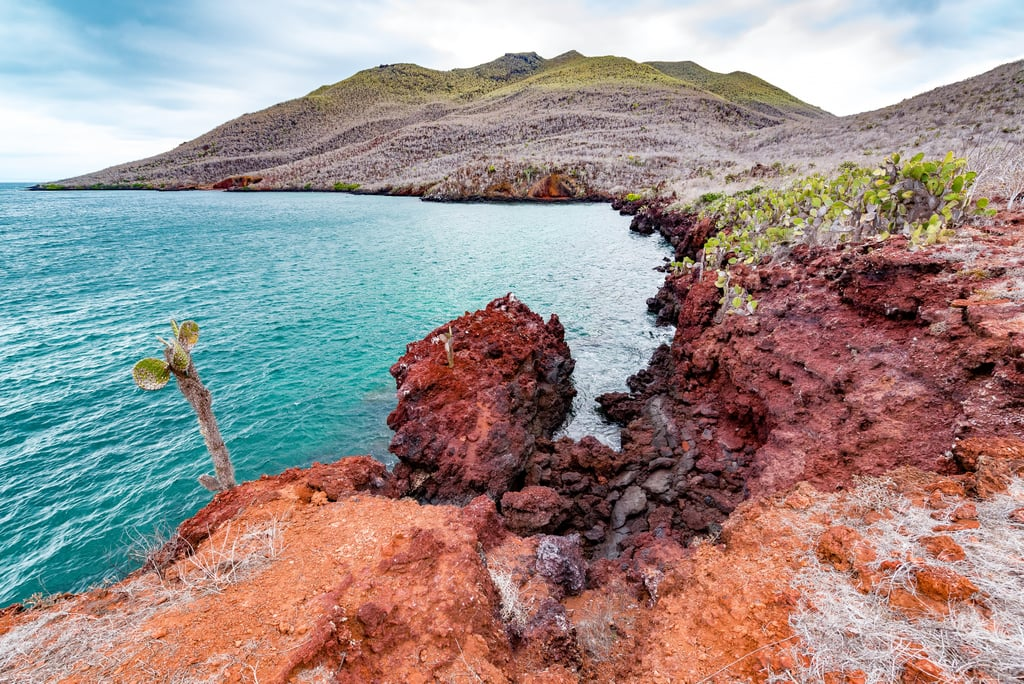 Sail Around the Galapagos and Observe the Wildlife