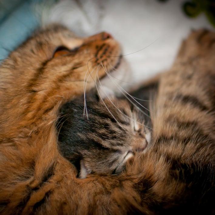 Mom is my favorite pillow. Source: Flickr user alexbartok