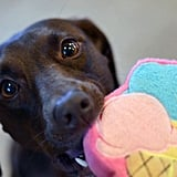 I scream, you scream, we all scream for this adorable ice cream dog toy ($10)! This cute toy has a squeaker that you and puppy are sure to love, and the toy is super durable and built for indoor and outdoor play.