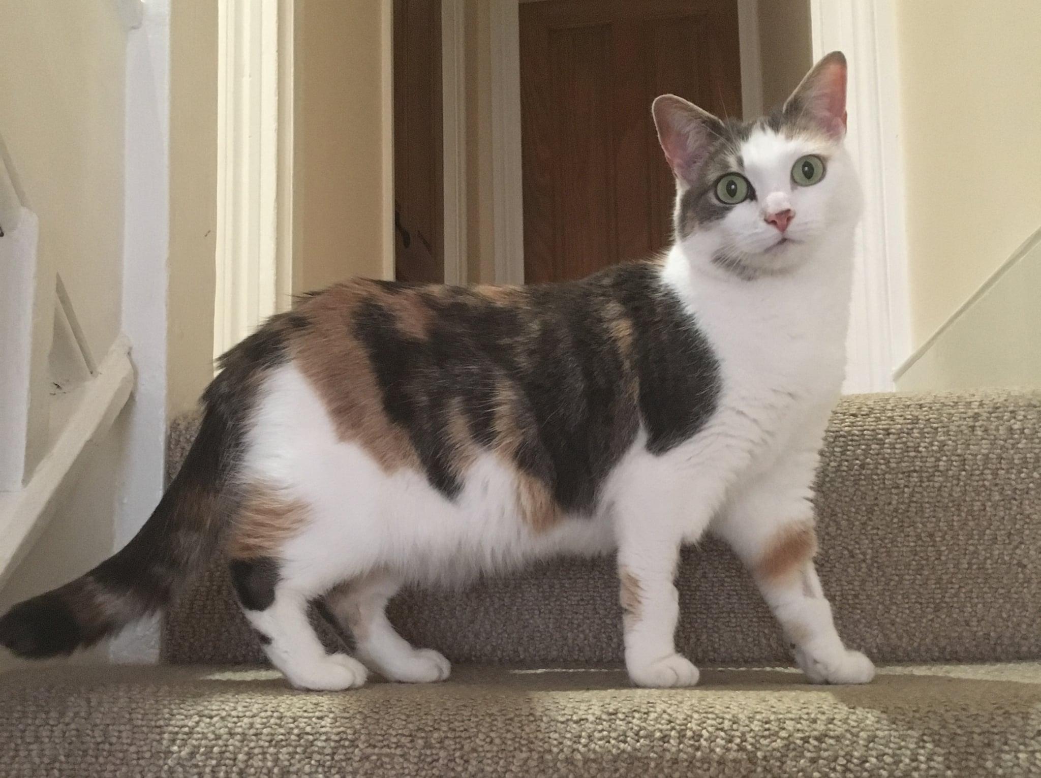 kitty cat meow