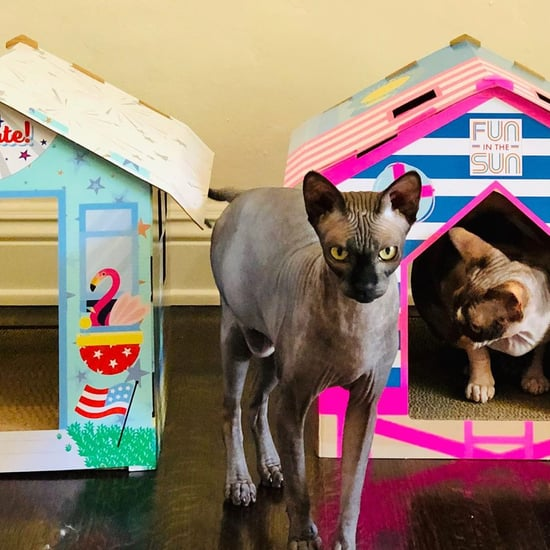 Summer Cat-Scratcher Houses From Target's Sun Squad Line
