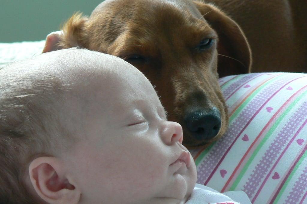 They make the best cuddle buddies.