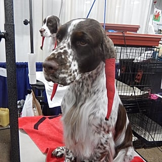 نصائح هامّة للعناية بمظهر الكلاب