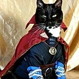 Cat Cosplaying as Dr. Strange