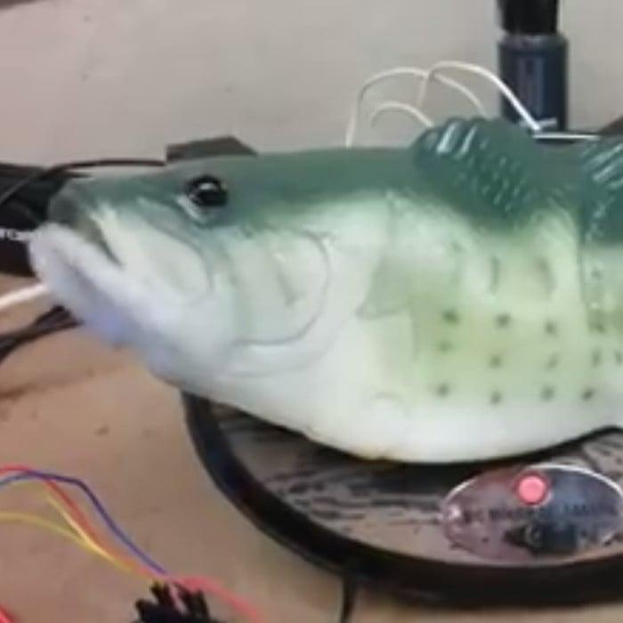 Alexa Big Mouth Billy Bass Hack Video