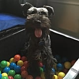 Have a Ball-Pit Party