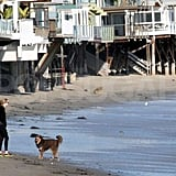 Josh Hartnett and Amanda Seyfried have fun with their dogs on the beach in LA.