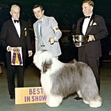 Old English Sheepdog: Two