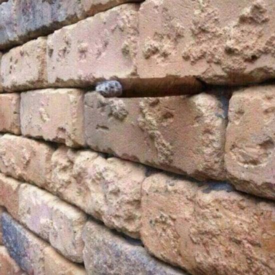 خدعة بصرية في جدار القرميد