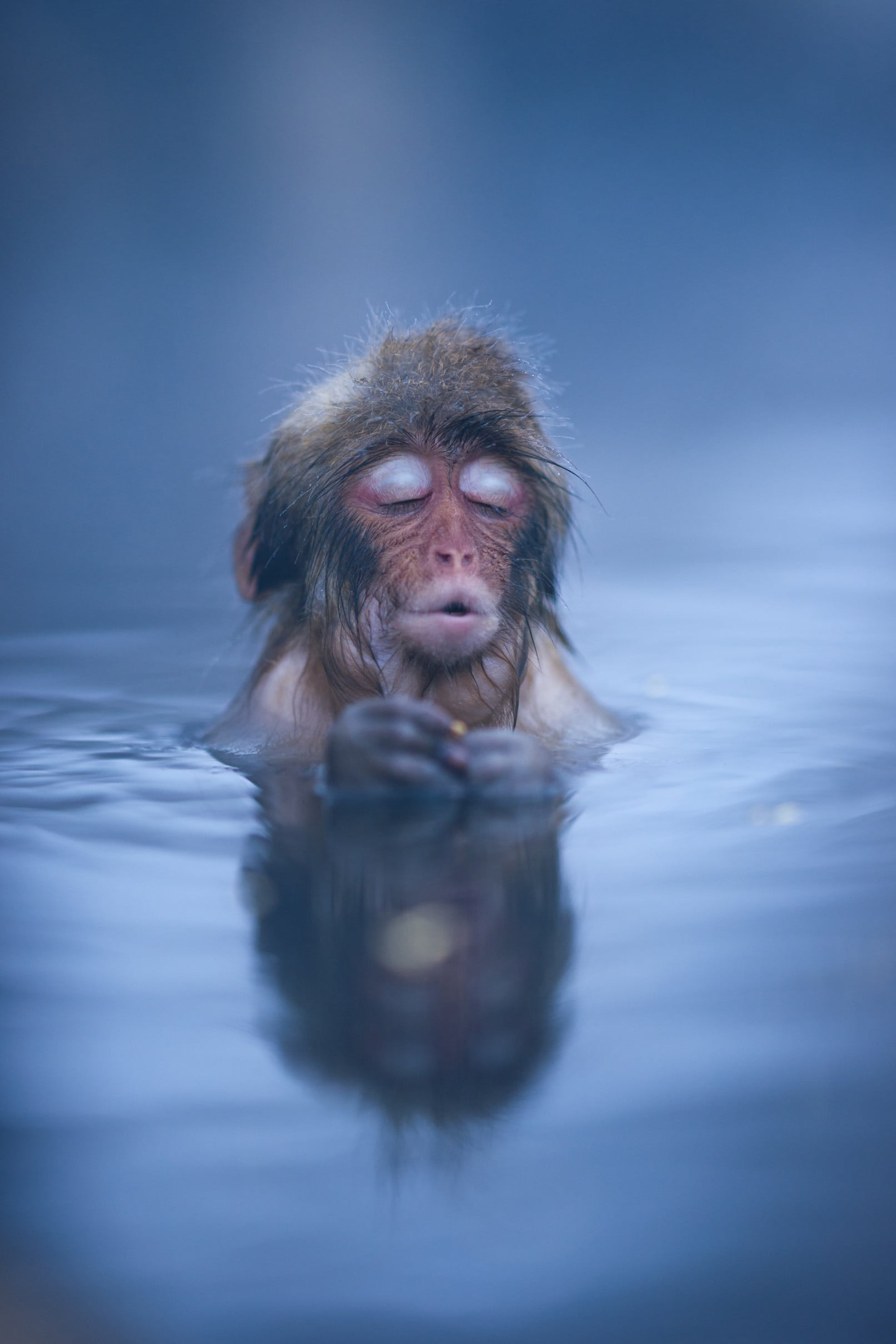 """A monkey relaxing in a hot spring in Japan's Nagano Prefecture."" Source: Reddit user HesterLee via Imgur"