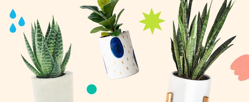 Shop Houseplants That Cool Your Home