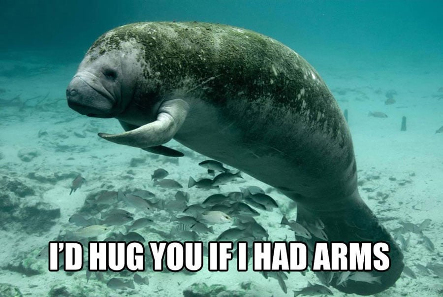 When Your Friend Going Through Harsh Breakup when your friend is going through a harsh breakup calming manatee