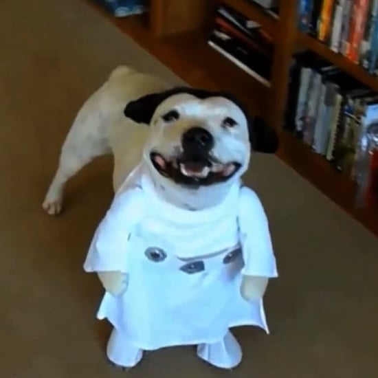 2-Legged Dog Costumes