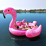 Flamingo Party Bird Island