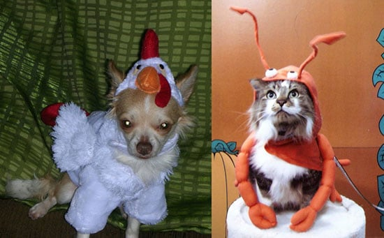 PetSugar's Halloween Photo Contest: The Results Are in...