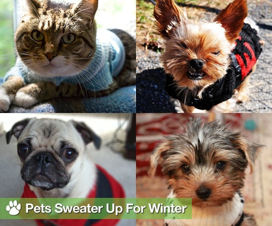 Pictures of Dogs and Cats in Sweaters