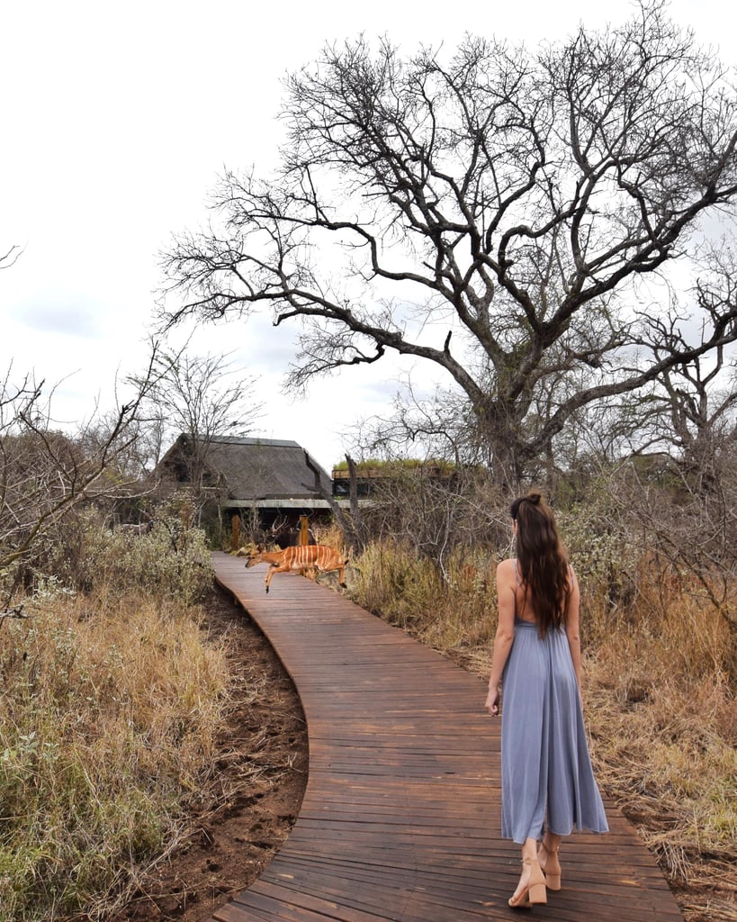 Safaris on a Budget or in Pure Luxury