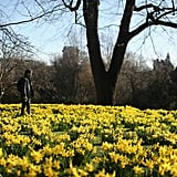 A man enjoyed the first signs of Spring while walking through London.