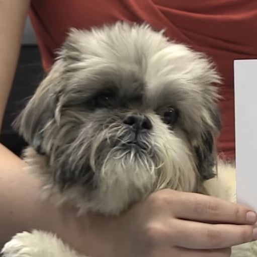 PETA Rescues Dog From Rabbit Hutch
