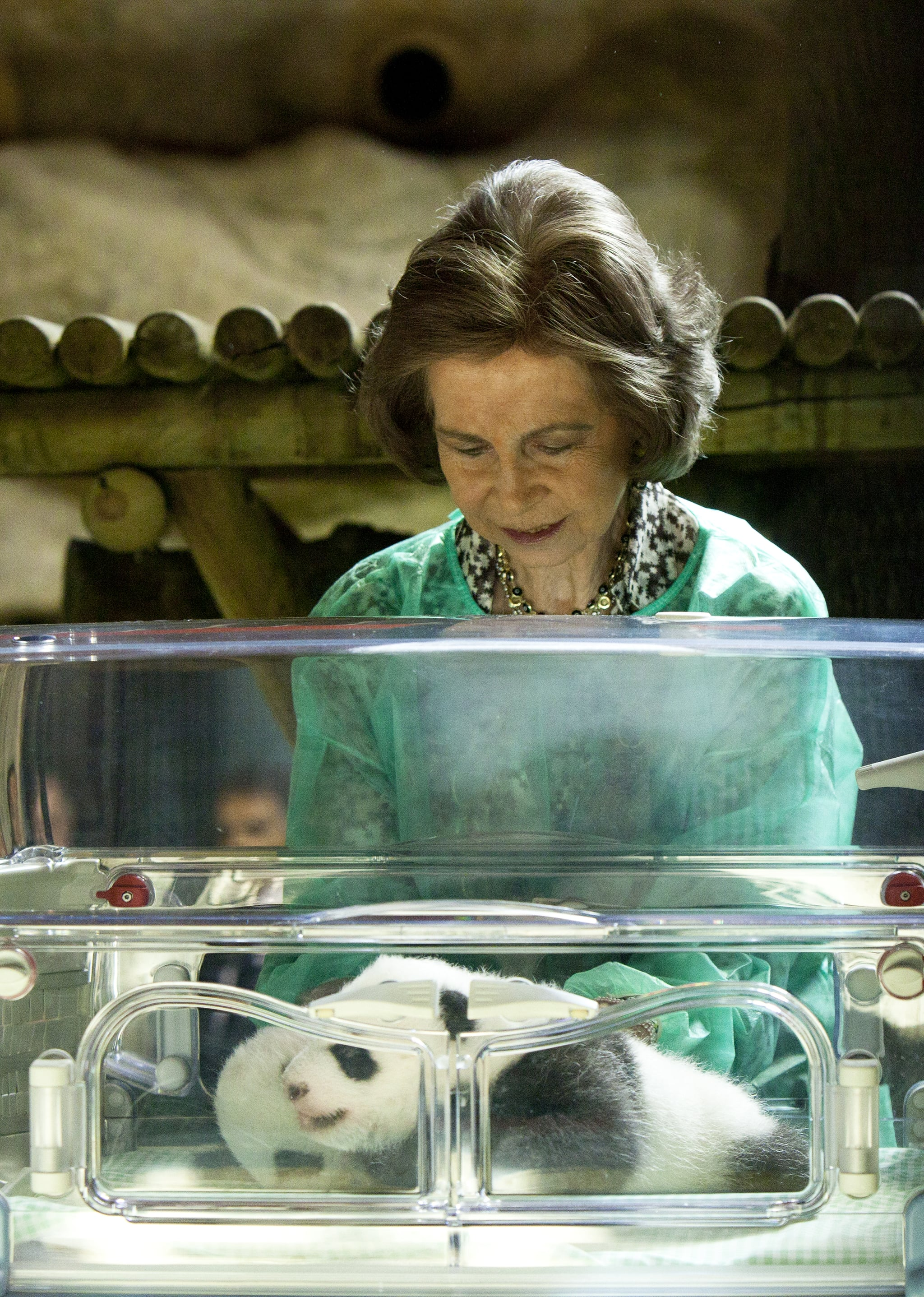 PopsugarLivingWild AnimalsPictures of Queen Sofia of Spain With Baby PandasMadrid's Panda Babies Have Furry Faces Fit For a QueenNovember 5, 2010 by Morgan Ashley Parker7 SharesChat with us on Facebook Messenger. Learn what's trending across POPSUGAR.Those camera-hogging pandas are at it again! From our first glance to that extra cute doctor checkup, the two yet-unnamed babes are Madrid's stars in the making. As a signal of their status, they've already held court for royalty! Queen Sofia of Spain stopped by to snuggle the little ones — while it's still safe to do so! — and it looks like this one is already telling her secrets . . . probably something bad about the other one hiding his face.See more of the royal meet and greet when you .Image Source: Getty Join the conversationChat with us on Facebook Messenger. Learn what's trending across POPSUGAR.Madrid Zoo And AquariumQueen SofiaGiant PandasWild AnimalsZoosSpainMadridScoopNewsFrom Our PartnersWant more?Get Your Daily Life HackSign up for our newslette - 웹