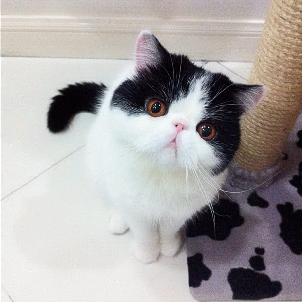 The Cutest Smushed-Faced Cats on Instagram