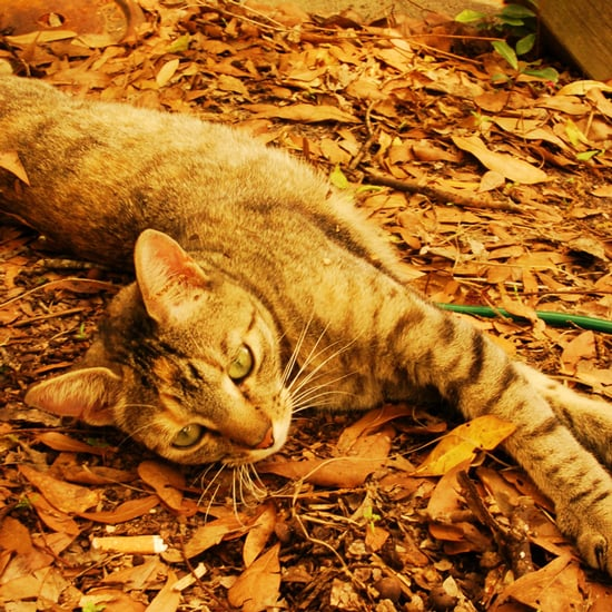 Auto Look Perfect >> Pictures of Cats in Leaves | POPSUGAR Pets