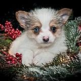 A Small Christmas Angel