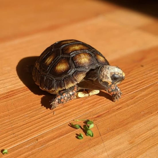 How Can I Tell If My Tortoise Is Sick?