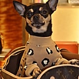 Louis Vuitton Monogrammed Dog Carrier