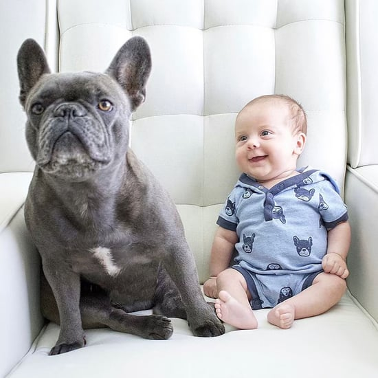 Pictures of French Bulldogs and Babies