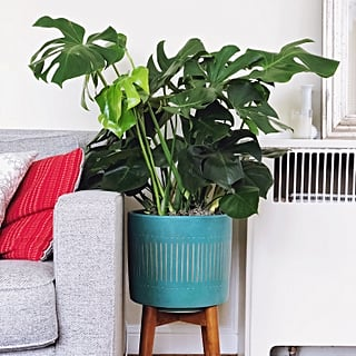 Monstera Plant Decorating Ideas