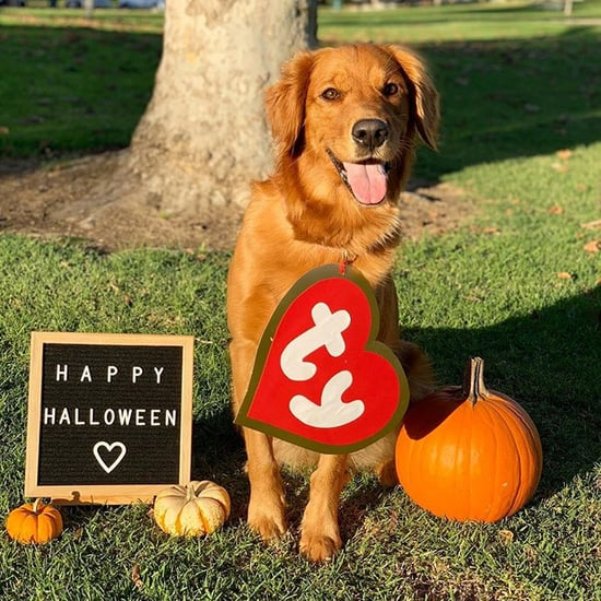 Photos of Cute Golden Retrievers in Halloween Costumes