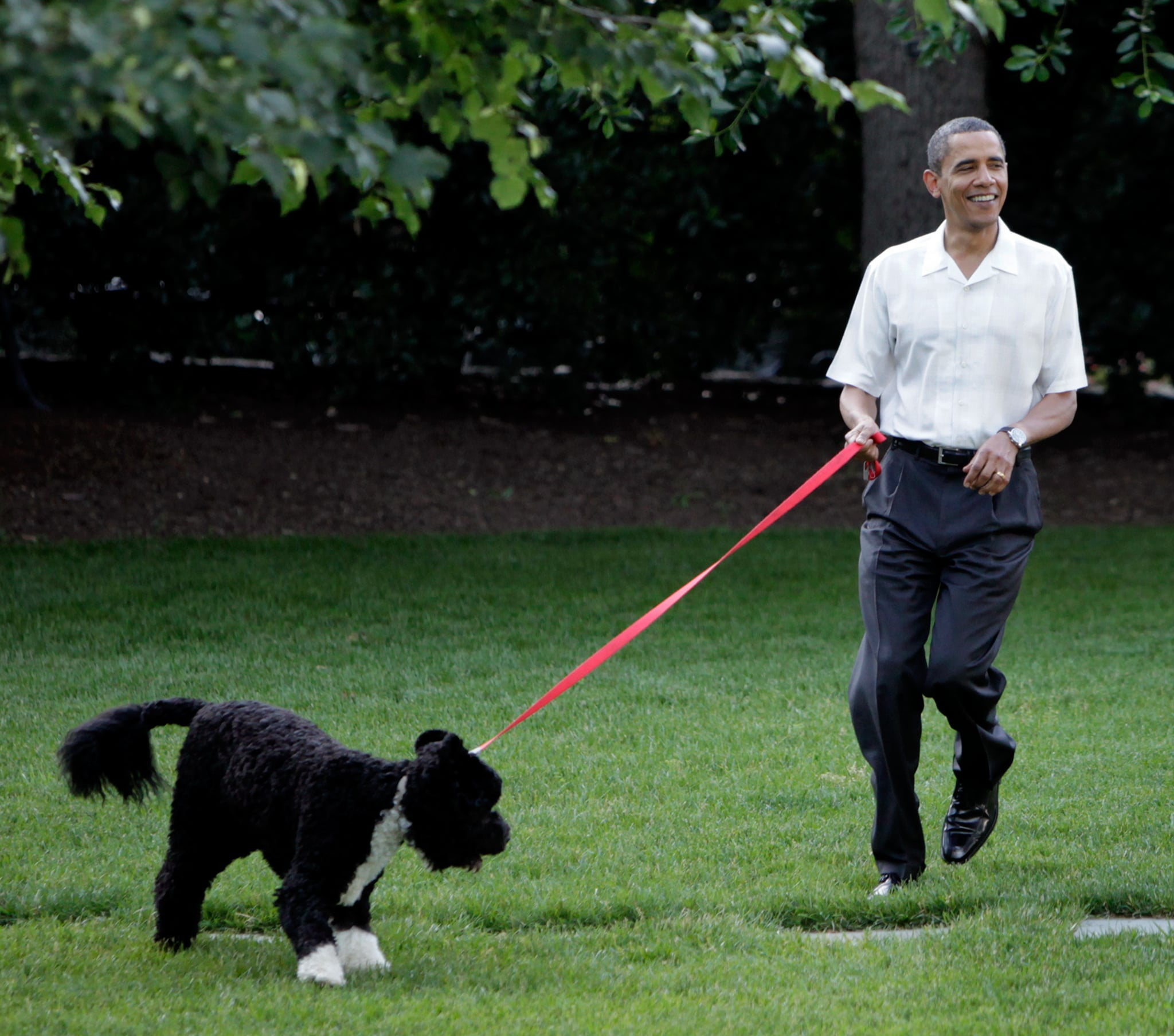 What Is Obamas Dogs Name