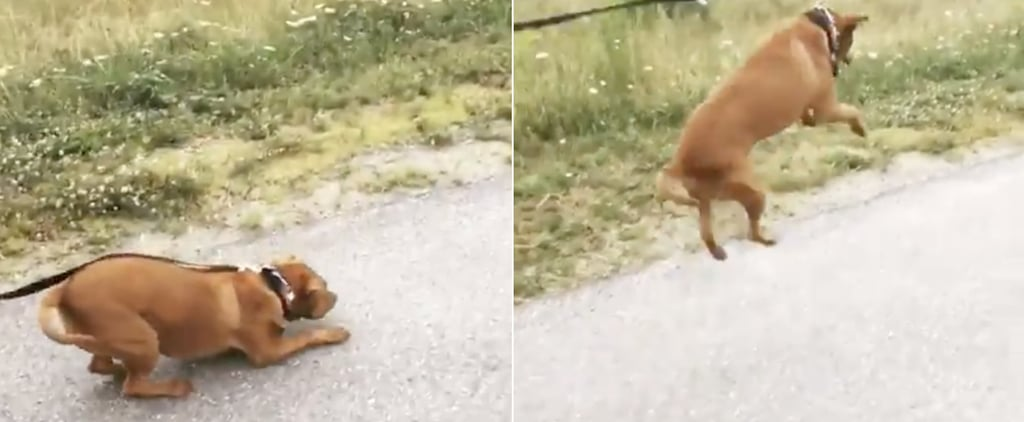 Viral Video of a Dog on His First Walk After Being Rescued