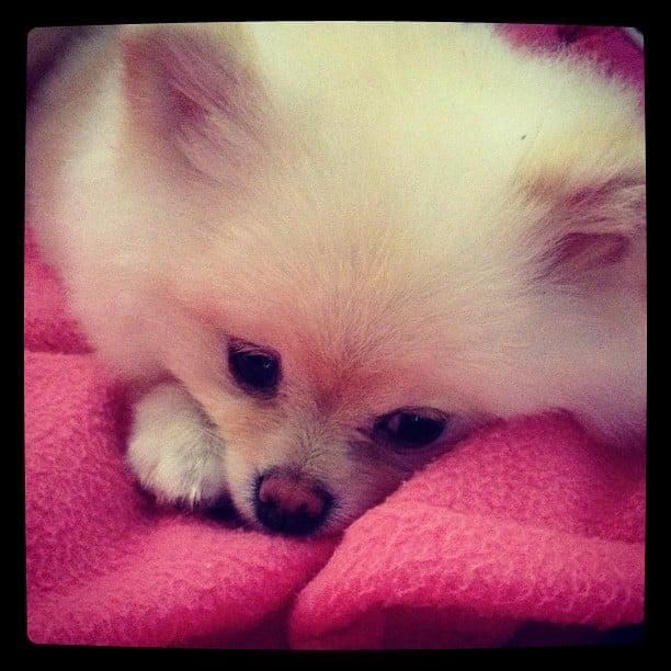 Fur + Fleece = One Snuggly Nap