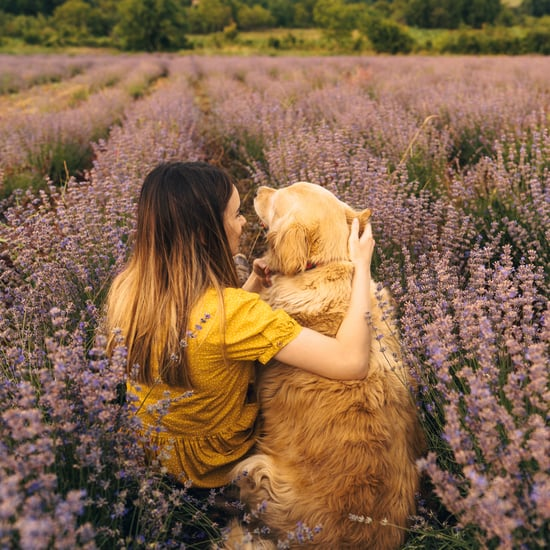 What Essential Oils Are Safe For Dogs?