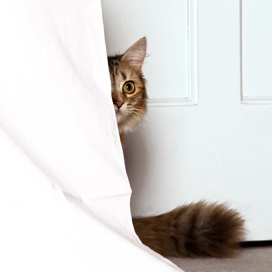 Why Do Cats Hide When They're Sick?