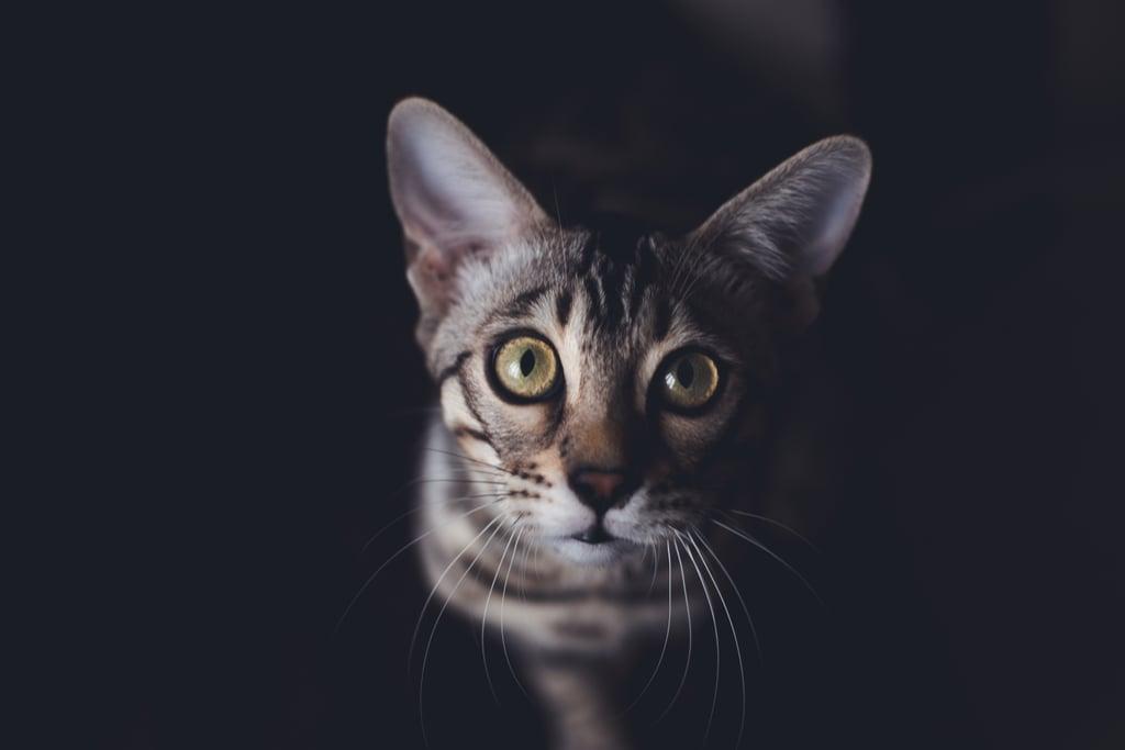 Look at those precious big eyes!