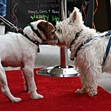Uggie greets another attendee at the Unleashed event. Source: Getty