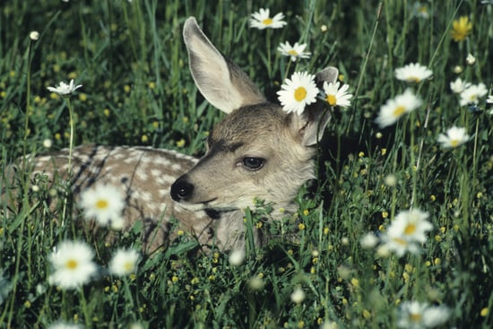 Primer: Plants That Deer Don't Like