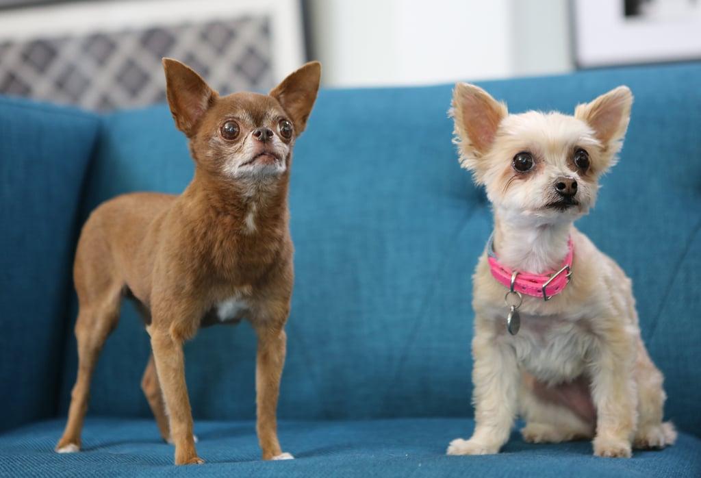 Chloe Kardoggian and Ella Bean | Instagram Dogs