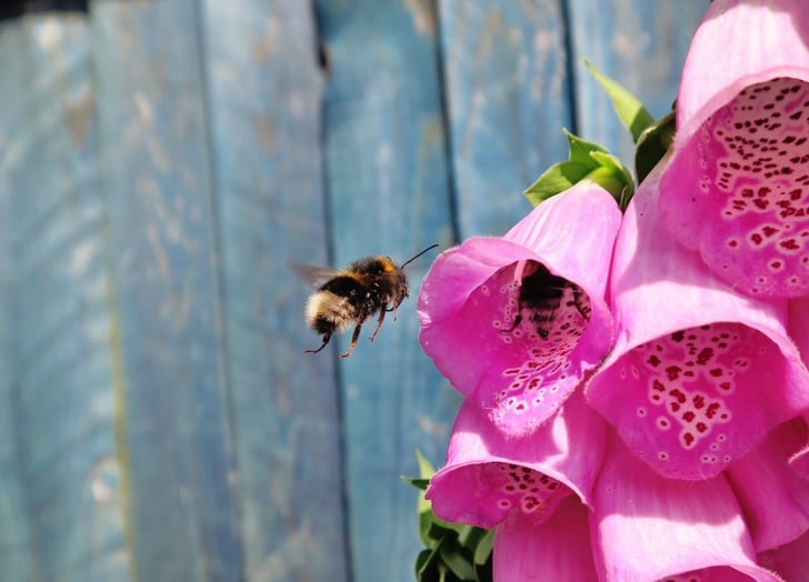 How To Keep Bees Away From Your House Popsugar Family